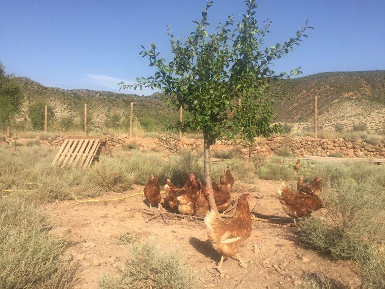 Huevos ecológicos La Brizna, de gallinas en libertad y gallineros de bioconstrucción